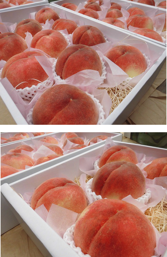 2014 特選一宮白桃 収穫発送