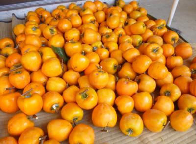 甲州百目柿